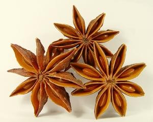 planta-medicinal-anis-estrelado