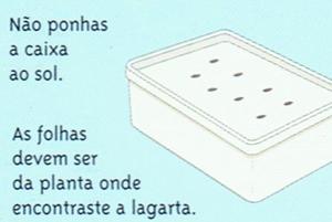 vida-lagarta-03