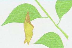 vida-lagarta-04