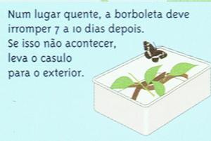 vida-lagarta-05