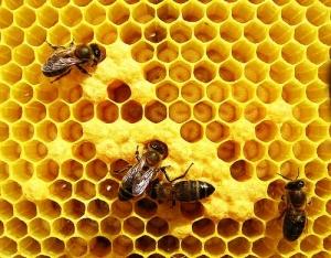apicultura-abelhas
