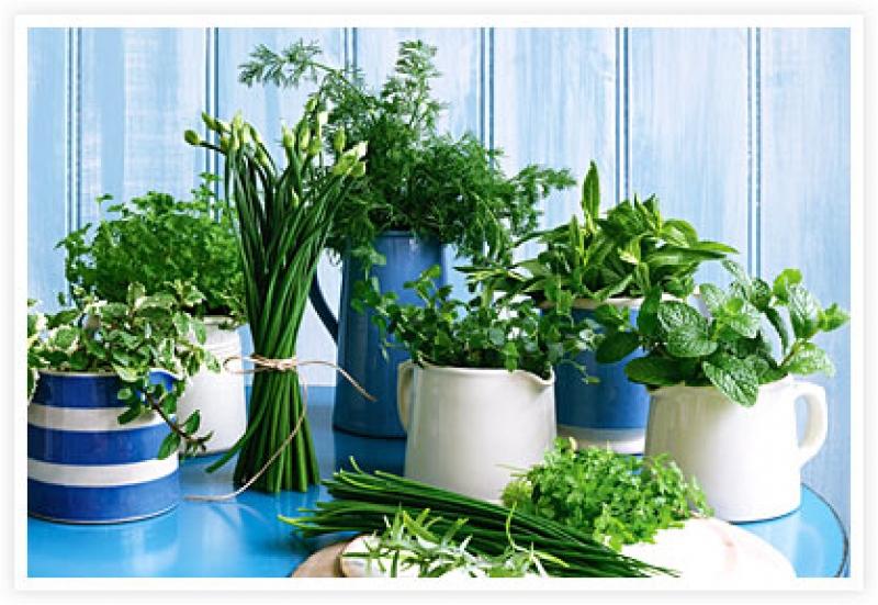 Ervas arom ticas utiliza o cultivo e conserva o como - Cultivar plantas aromaticas en casa ...
