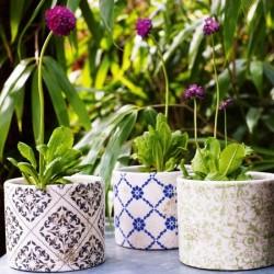 Como Cultivar Plantas Em Vasos Como Fazer