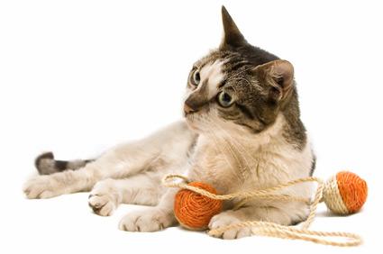 gato-idoso2