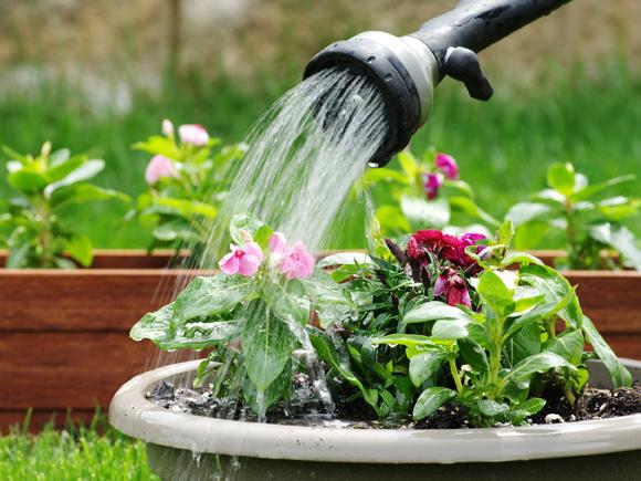como poupar agua jardim