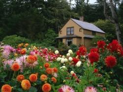 jardim bonito com pouco dinheiro