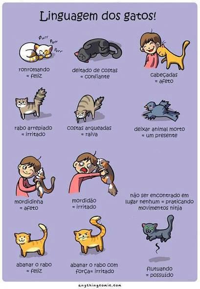 Linguagem dos gatos