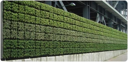 jardim vertical no muro:Como fazer um jardim vertical no muro – Como Fazer