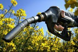 biodiesel4jpg